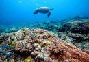 Nade com as tartarugas na Austrália e conheça o espetáculo natural da Barreira de Corais